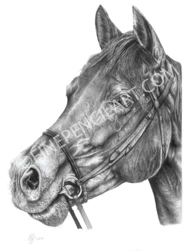 Horse - 025483