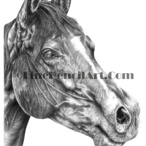 Horse – 514123