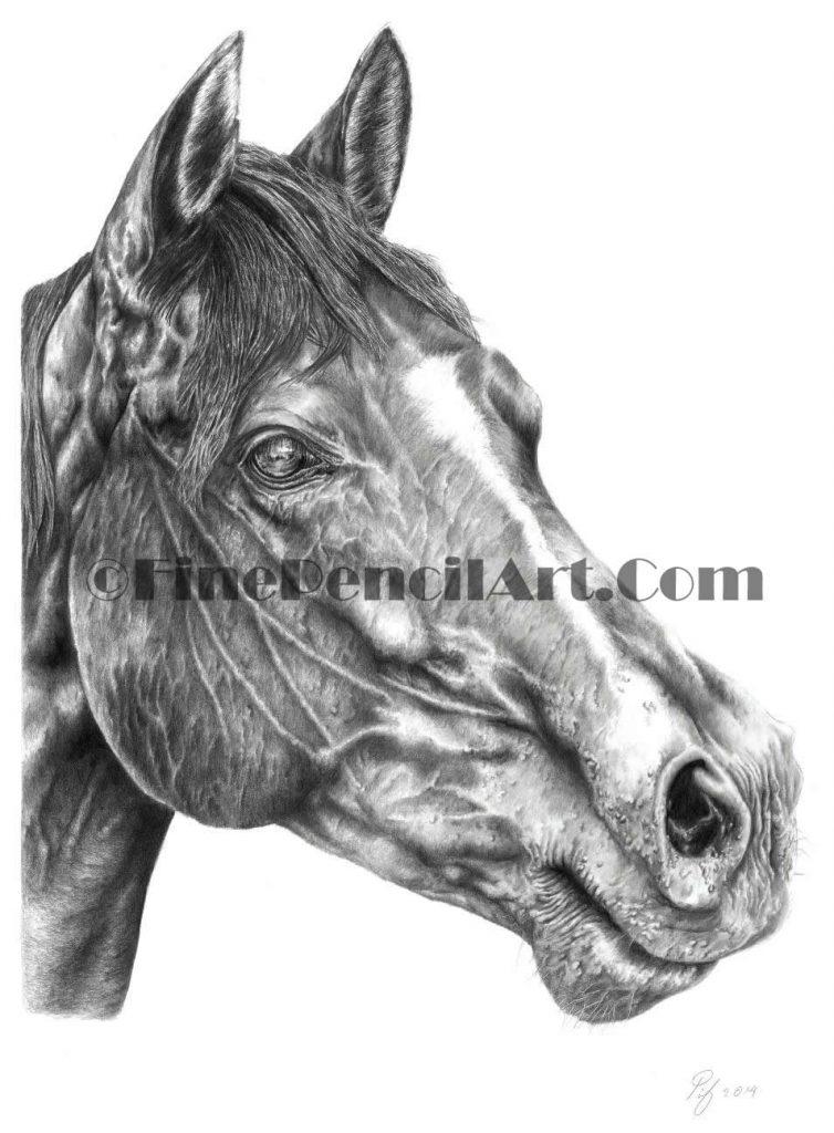 Horse - 514123