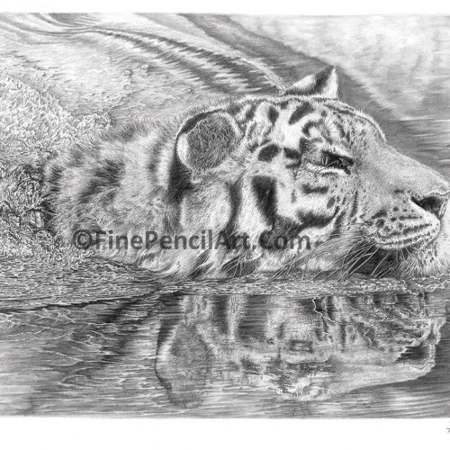 Tiger Artwork- 052847